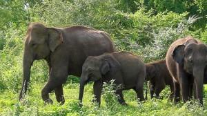 Rodzina słoni w rezerwacie. To jedyne miejsce gdzie mogą się schronić przed ludźmi