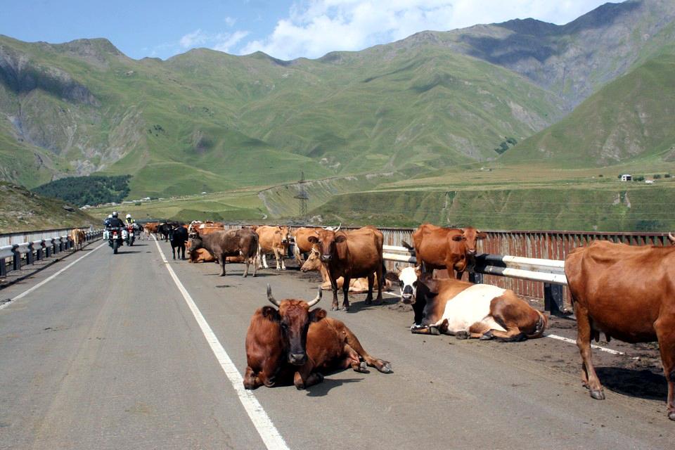 Krowy na każdym moście mieszkały od strony zachodniej. Dotąd nie wiem dlaczego