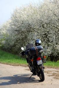 Suwalszczyzna wiosną to również niesamowite zapachy