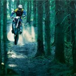 Hałas w lesie