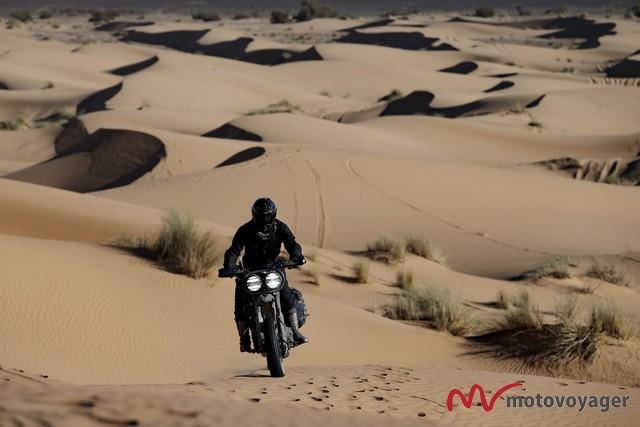 desert wolves