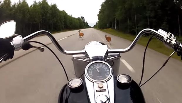 zderzenie motocyklem z dzikimi zwierzętami odszkodowanie