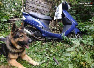 kair pies tropiacy czestochowa skuter kradziez